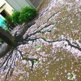 春の雨の中・・